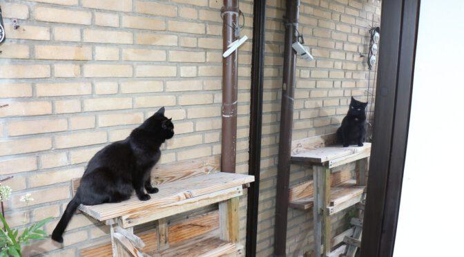 Lichtquelle im Nacken – die Katze spiegelt sich in der Spiegelfolie