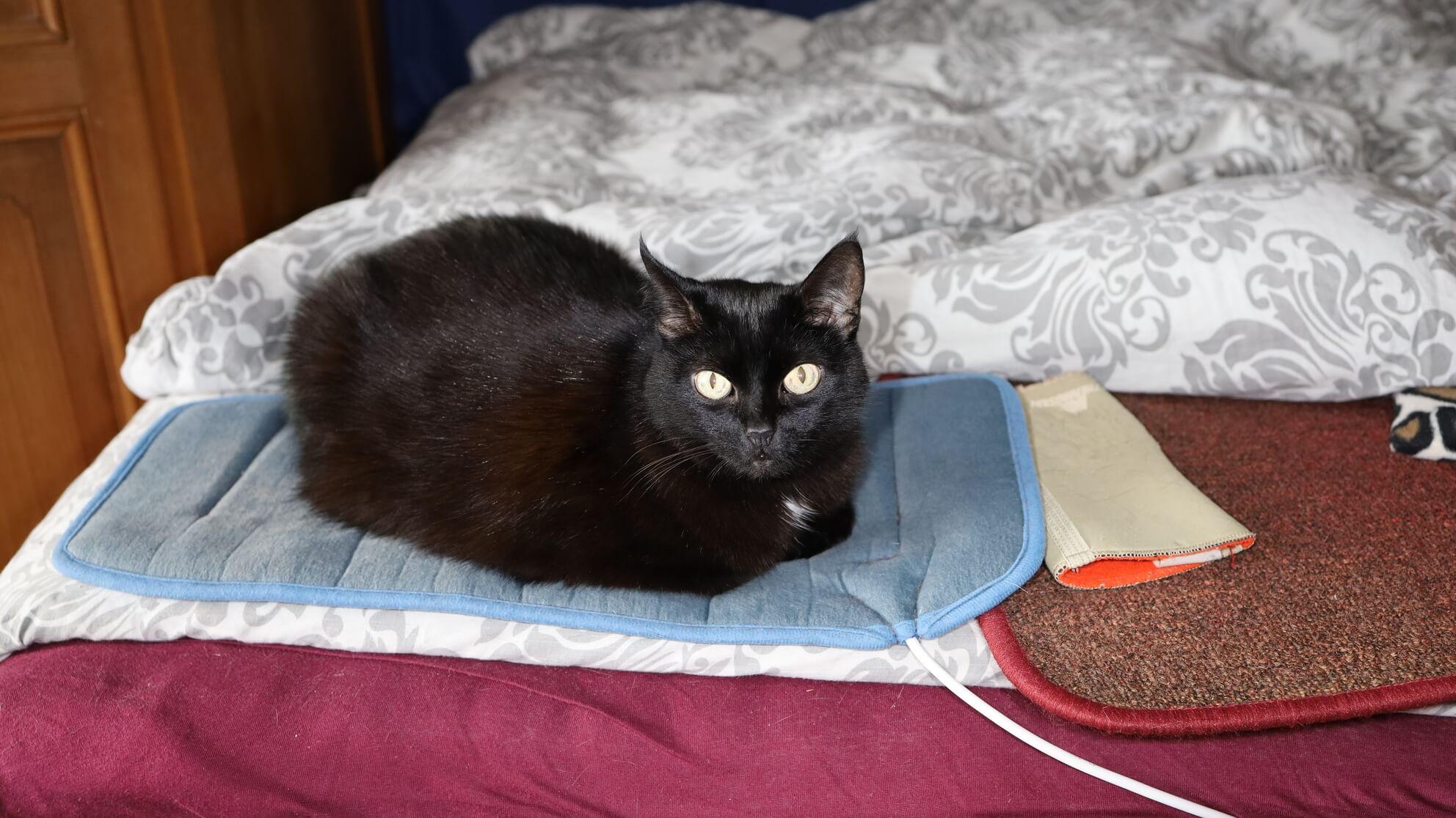 Diese Katze liegt im Bett – sie füttert leidenschaftlich gerne Hausstaubmilben