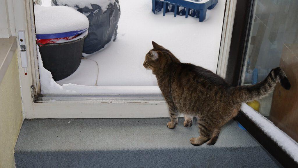 Katze Dgani vor der offenen Balkontür, draußen Schnee – besser nur Stoßlüften